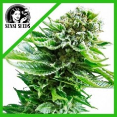 SEEDS BANK WHITE WIDOW FEM X5